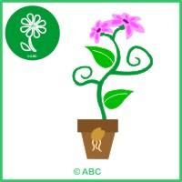 HRA KVIETOK - Od semienka k rastlinke